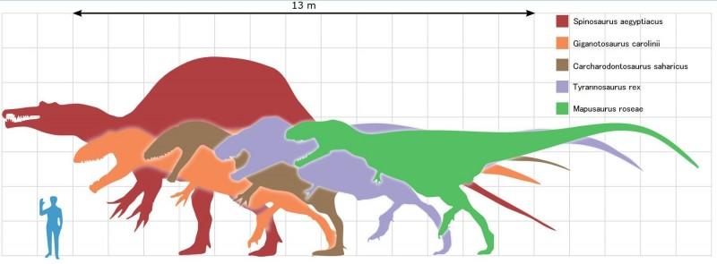 肉食恐竜比較