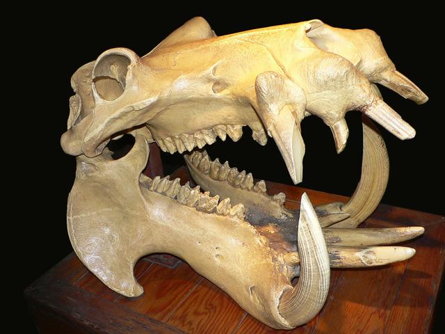 【捕食】シャチがホホジロザメを餌にし始めた…体当たりし気絶させて襲う [無断転載禁止]©2ch.netYouTube動画>8本 ->画像>65枚