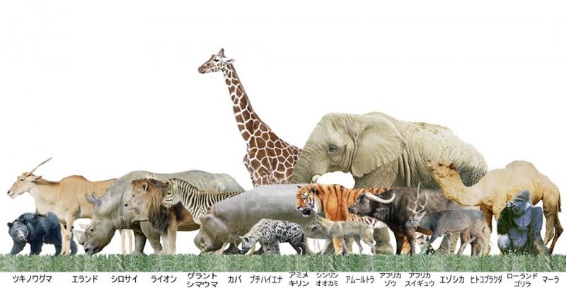 動物大きさ比較
