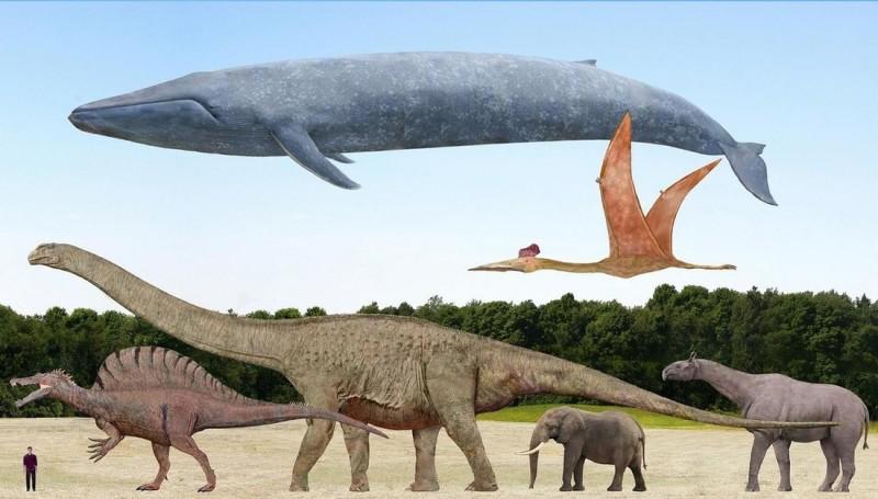巨大動物比較