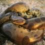 世界最大のヘビは何か